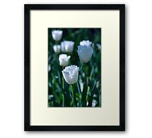 White Frilled Tulip Framed Print