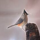 Tufted Titmouse by Kathy Weaver