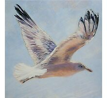Seagull in flight. Elizabeth Moore Golding 2010  Photographic Print