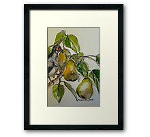 Partridge in a pear tree. Elizabeth Moore Golding 2011 Framed Print