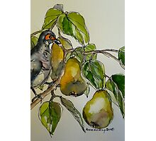 Partridge in a pear tree. Elizabeth Moore Golding 2011 Photographic Print