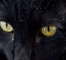 Eyes of a Black Cat by ramiromarquez