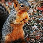 Praying Squirrel by Tracie Louise