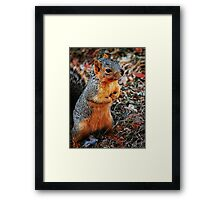 Praying Squirrel Framed Print