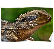 Water Dragon, Lane Cove National Park, Sydney Poster