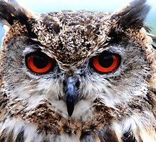 Wild Morning Owl - Bright Eyes by brightsunlight