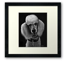 Howard Framed Print