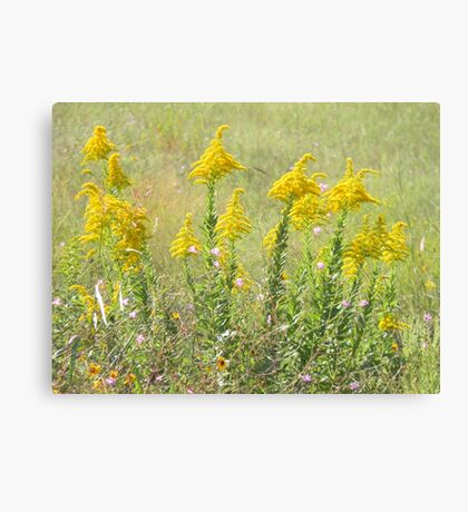 Guess What's Blooming? GOLDENROD! Canvas Print