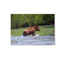 River Crossing Moose Art Board