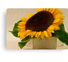 Short Petaled Sunflower In Star Box Canvas Print
