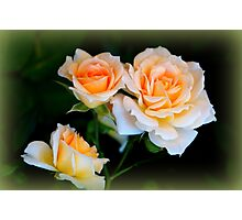 Apricot Dream Photographic Print