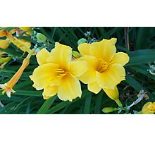 A pair of Asian Lilies Photographic Print