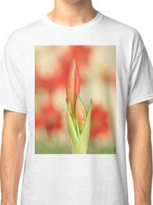 Hippeastrum Flower - Beautiful Red Romance Classic T-Shirt