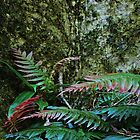 Red Tipped Ferns and Lichen by myraj