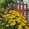 Flowers in A Yard