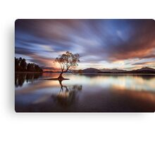 One Calm Tree Canvas Print