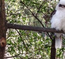 Kookaburra serenity  Sticker