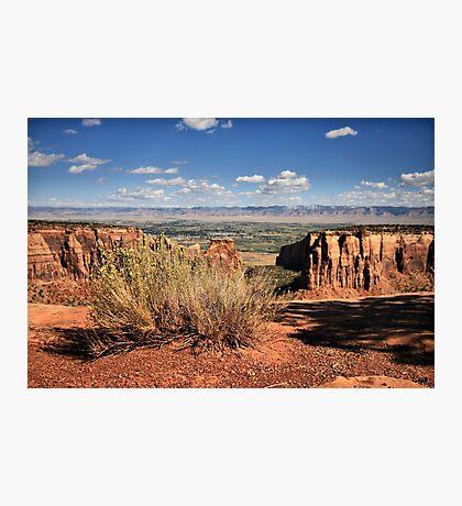 Sagebrush Photographic Print