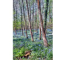 Forest of Dean Bluebells Photographic Print