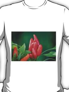 chili in vegetable garden T-Shirt
