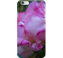 dried rose in the garden iPhone Case/Skin