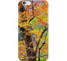 MAPLE TREES, AUTUMN iPhone Case/Skin
