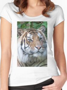 tiger at the zoo Women's Fitted Scoop T-Shirt