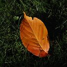 Just a Leaf by BlueMoonRose