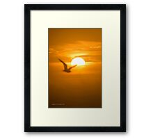 Seagull Passing The Sun - For Dad | Wantagh, New York Framed Print