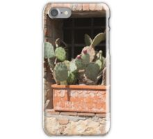 succulent plant in the vase iPhone Case/Skin