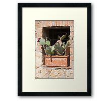 succulent plant in the vase Framed Print