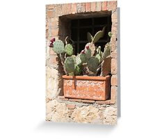 succulent plant in the vase Greeting Card