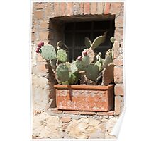 succulent plant in the vase Poster