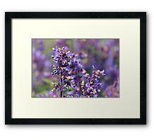Lavender Flowers Framed Print