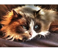 Cookie Kitty Photographic Print