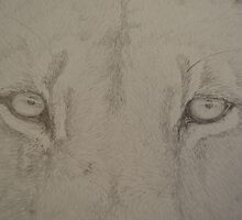 Lion Eyes by leannedavy