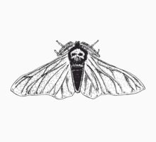 Skull moth by Matthew Britton