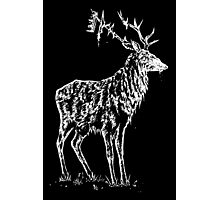 Stag and crown Photographic Print