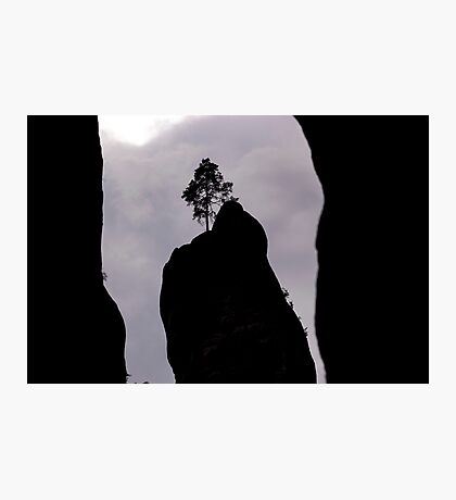 Lonely Tree on the Rock - Nature Photography Photographic Print