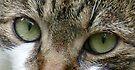 Cat's Eyes by Benedikt Amrhein