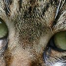 Cat's Eyes by Benedikt Amrhein