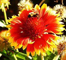 Nectar by scarletvanity