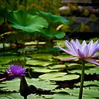 Water Flowers by TnKArts