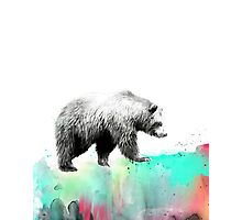 Wild No.1 // Bear Photographic Print