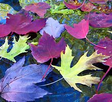 Leaves in a Birdbath by Mike Solomonson