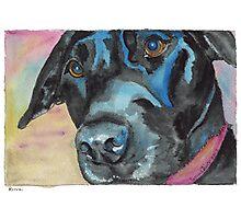 "Little Black Dog (""Korra"" the lab-mix) Photographic Print"