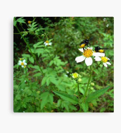 BLACK BEES WITH BUSTLES Canvas Print