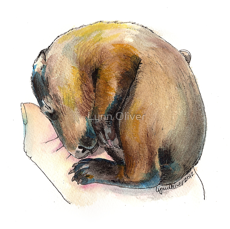 Curled up Baby Groundhog by Lynn Oliver