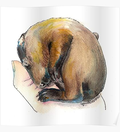 Curled up Baby Groundhog Poster