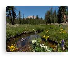 King's Creek Meadow with Wildflowers Canvas Print